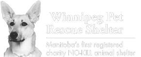 Winnipeg Pet Rescue Shelter